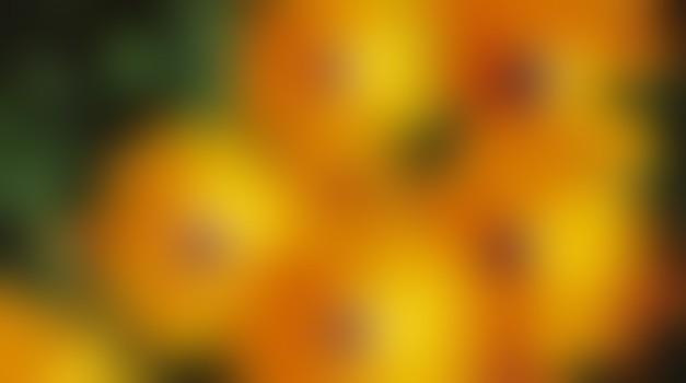 Oranžna je združitev pozitivnih lastnosti, kot sta veselje do življenja in vedrina.