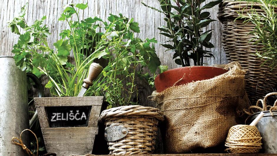 Strokovni nasveti za gojenje zelišč na balkonu, terasi ali okenski polici (foto: Maja Danica Pečanić)