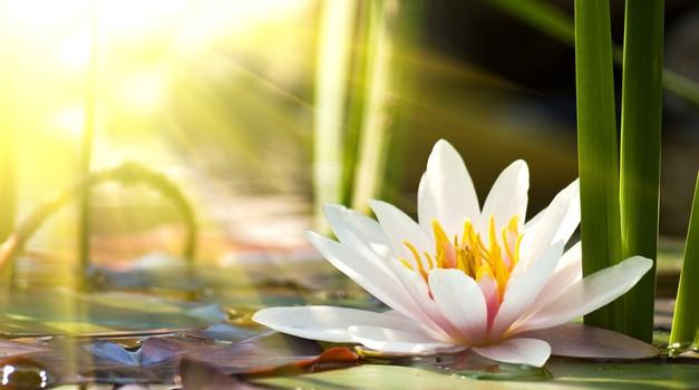 Cvetlični horoskop ali katera rožica ste? (foto: Shutterstock)
