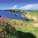 ... ter otoček cvetja ob pogledu na morje. (foto: promocijsko)