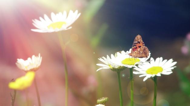 Na sončni strani življenja. (foto: Shutterstock)