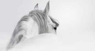 Konj in njegovo poslanstvo terapevta