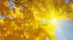 Pustite sončnim žarkom, da pokukajo v vaš prostor