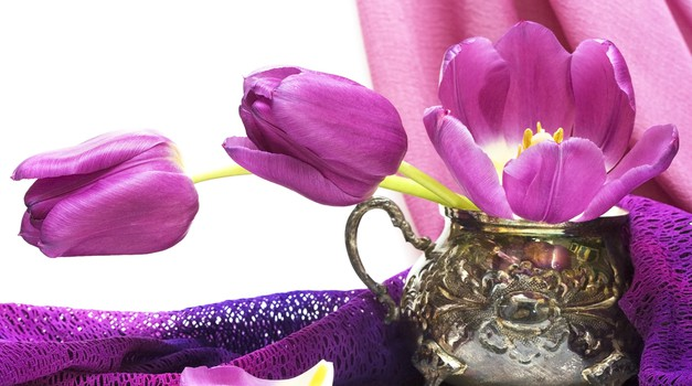 Šopek tulipanov (foto: Shutterstock)