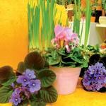 Barve v lončkih polepšajo sive dni (foto: Arhiv revije Lisa)
