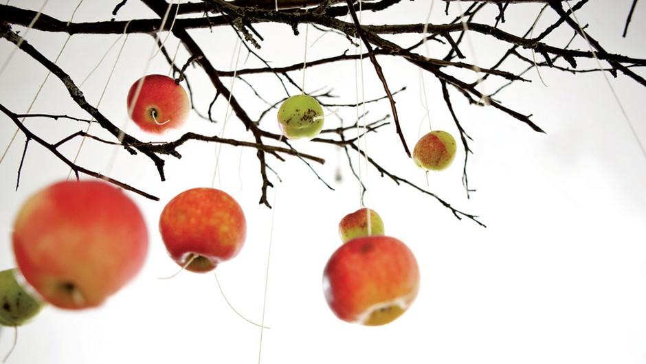 Podarite jabolko! (foto: Mare Milin)