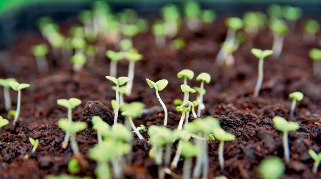 Vaš prvi eko vrt (foto: Shutterstock)