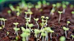 Vaš prvi eko vrt