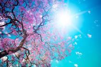 pomlad-cvetoce-drevo-sonce