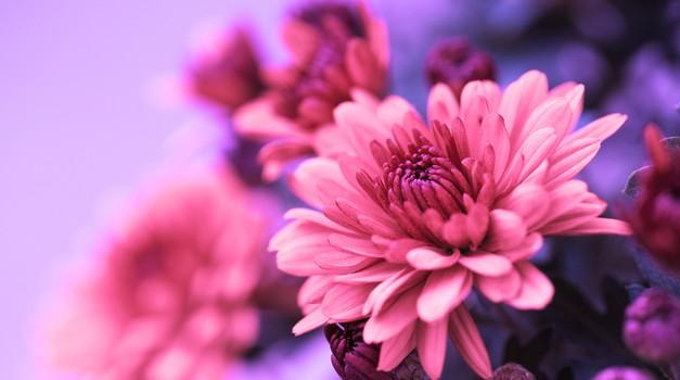 Naberite sivko za dobro razpoloženje in pozitivno energijo (foto: Shutterstock)