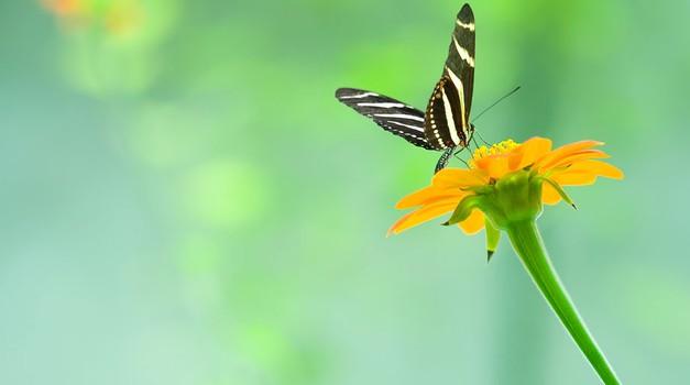 Vse okoli nas bi moralo biti v ravnovesju (foto: Shutterstock)