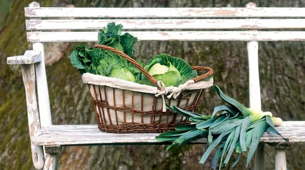 Jesenska zelenjava (foto: Mare Milin)