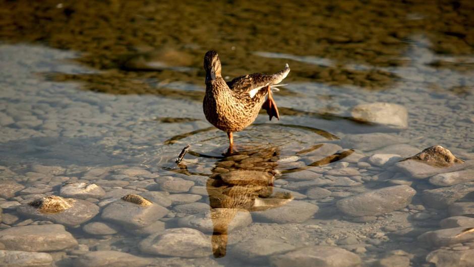 8. Sensa vikend: Zahtevno ravnovesje (foto: Helena Kermelj)