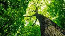 Po sledi izjemnih dreves na Slovenskem