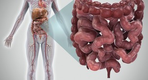 Vse bolezni se začnejo v črevesju!