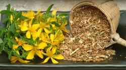 Sejem Narava-zdravje: Krepimo zdravje z zdravilnimi rastlinami