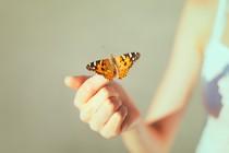 metulj-dlan-zaupanje
