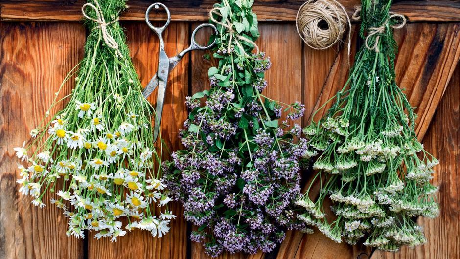 Užiten in okusen je lahko tudi plevel (foto: Shutterstock)