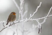 zima-ptica-led