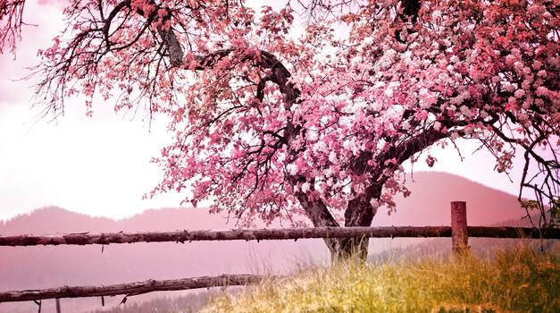 Pomladni val (foto: Shutterstock)