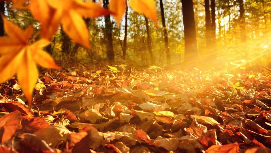 Numeroskop od 16. do 22. novembra 2015 (foto: Shutterstock)