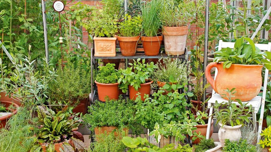 Koristni nasveti za domače vrtnarjenje (foto: Shutterstock)