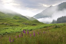 narava-skotska