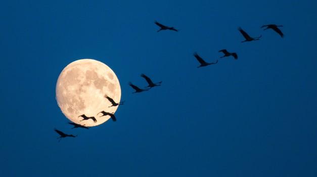 Vpliv planetov v četrtek: Luna v Vodnarju  v kombinaciji s polno luno (foto: Profimedia)