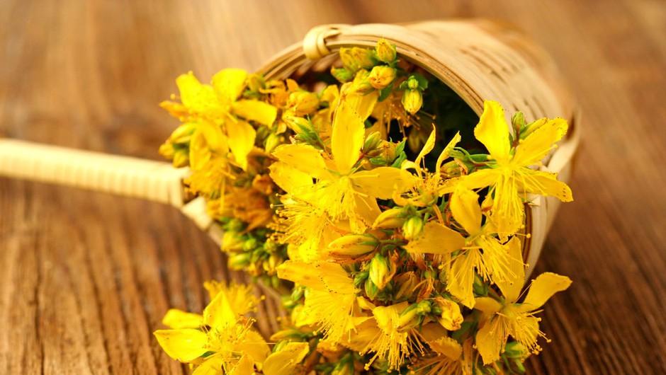 Pripravite si šentjanževo olje (foto: Profimedia)