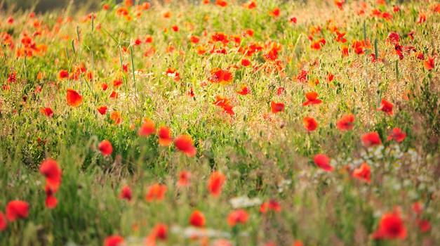 Poiščite optimizem in notranje zadovoljstvo (foto: Profimedia)