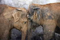 slon-ljubezen