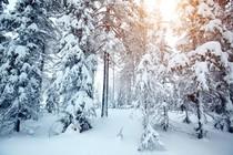 zima-zimska-idila-gozd