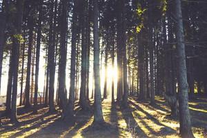 gozd-drevesa