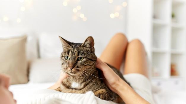 Mačka – odlična terapevtka (foto: profimedia)