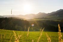 soncni-zahod-travnik