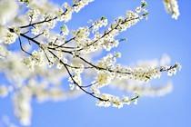 pomlad-cvetje