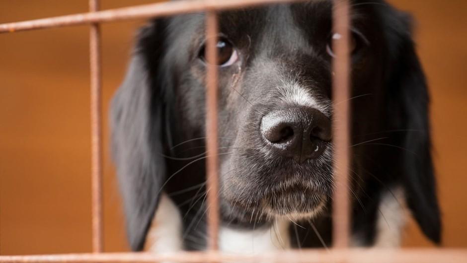 Zakaj posvojiti brezdomne živali? (foto: profimedia)