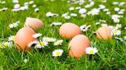 Česa o jajcih nočemo vedeti?