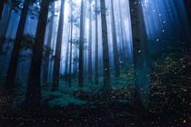 gozd-vile-carobno-kresnice