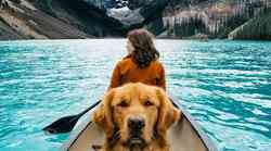 Kako nas vidijo psi?
