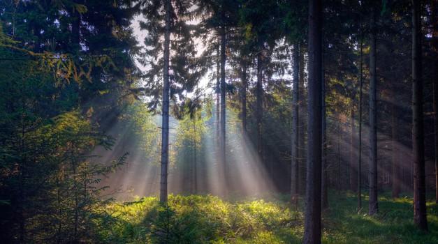 Keltski horoskop: Katero drevo ste? (foto: profimedia)