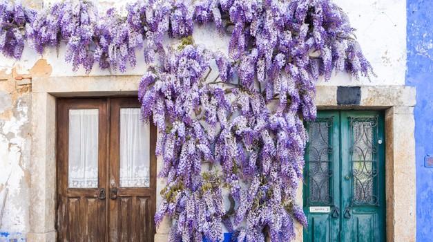 Vijolična barva lahko vašemu domu prinese srečo (foto: profimedia)