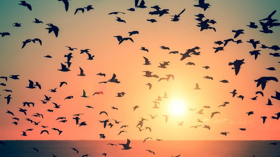 Kar uničuje svobodo, ni ljubezen (foto: profimedia)