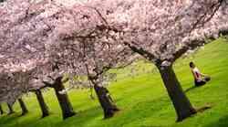 3 pomladni joga dogodki