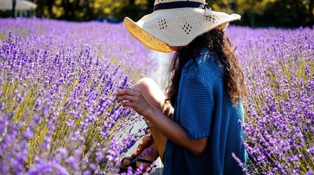 Vonj sivke z našega eteričnega telesa srka negativne energije (foto: unsplash)