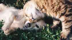Kakšna je razlika med ljudmi, ki imajo raje pse in tistimi, ki imajo raje mačke?