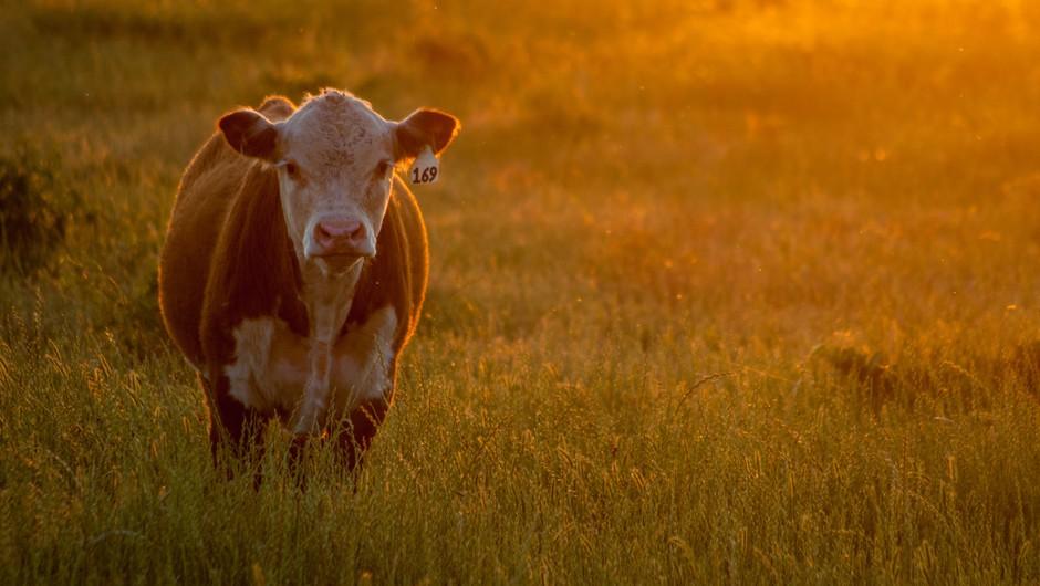 Sporočilo za današnji dan: Živali imajo dušo (foto: unsplash)