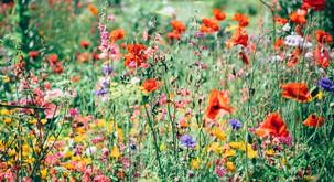 Sam posadi svoj vrt in okrasi svojo dušo, namesto da čakaš nekoga, da ti prinese rože