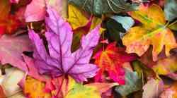 Oktober: Rez preteklosti in karme