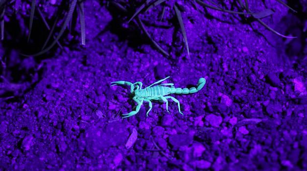 Vse to razumete, če ste rojeni v znamenju škorpijona (foto: unsplash)